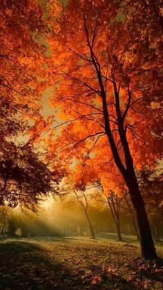 Fall Foliage at peak! Love the Fall Foliage! Foto Nature, All Nature, Autumn Nature, Autumn Forest, Fall Pictures, Pretty Pictures, Fall Pics, Autumn Scenes, Belle Photo