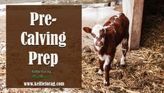 Pre-Calving Prep February 2, 2017 by KellieForAg  Calving is my favorite time of year! Learn what we do on our farm to make sure that babies come into the world healthy and happy!