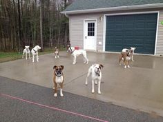 Yep 9!!!!   A community of Boxer lovers!