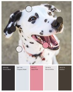 """SherwinWilliams on Instagram: """"Dalmatians! Whippets! Corgis! Boxers, oh my! Every dog has its day—which happens to be today. Happy #NationalDogDay to all our furry…"""""""