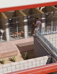Image 9 of 26 from gallery of Palm Springs Animal Care Facility / Swatt Shelter Dogs, Animal Shelter, Shelters, Summer House Garden, Home And Garden, Palm Springs, Dog Boarding Kennels, Dog Kennels, Luxury Dog House