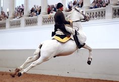 """""""Behind the scenes at Vienna's Spanish Riding School,"""" by the Working Mom's Travels"""