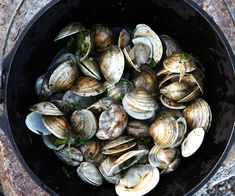 Black Pepper Pipis (Little Neck Clams) from Moveable Feast Mexican Appetizers, Cold Appetizers, Vegetarian Appetizers, Appetizers For Party, Appetizer Recipes, Clam Recipes, Seafood Recipes, Seafood Dinner, Fish And Seafood
