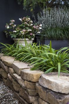 Dianella 'Lime Splice' • Planting en masse - 30cm apart • Growing in containers • Softening the edge of driveways and other hard surfaces • Both native and non native gardens • Coastal locations Mixed Border, Manor Garden, Border Plants, Australian Garden, Water Wise, Gardening, Planting, Landscape, Lime
