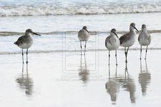 Google Image Result for http://th07.deviantart.net/fs70/200H/i/2011/145/5/9/birds_on_the_beach_by_ashercarson-d3h7my7.jpg