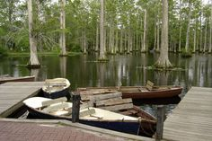 Cypress Gardens, Goose Creek SC Where The Notebook was filmed in the scene with the swans.