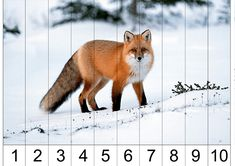 тематичексая неделя дикие животные Primary Classroom, Educational Games, Close Image, Skip Counting, Arrow Keys, Montessori, Printables, Language, Learning Games