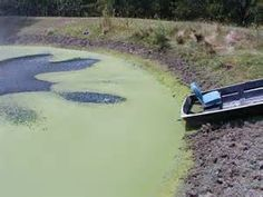 Solutions for Algae in Ponds - http://www.floridapondmanagement.com/algae-in-ponds/