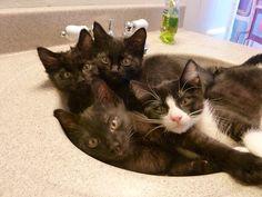 need bigger sink mom