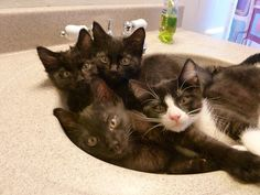 Four kittens in one sink? Is that even possible?!