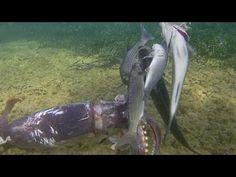 pesca sub:calamaro gigante + belle spigole, pescata di santo stefano