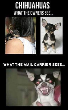 #postalworkerproblems