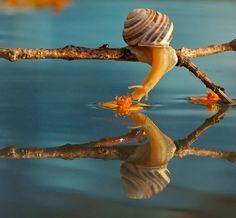 <b>Ukrainian photographer Vyacheslav Mishchenko catches these unbelievably stunning up-close photographs of snails, and I