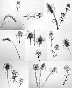 Discover recipes, home ideas, style inspiration and other ideas to try. Flower Sketches, Plant Drawing, Halloween Makeup, Tattoo Inspiration, Body Art, Insects, Character Design, Artsy, Ink