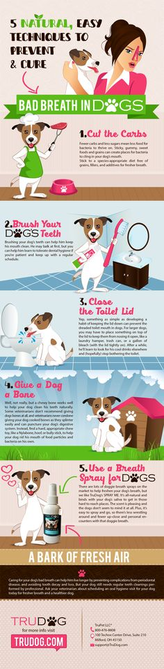 Discover 5 Natural/Easy Techniques to Prevent & Cure Bad Breath in Dogs 	http://trudog.com/home/5-natural-easy-techniques-to-prevent-and-cure-bad-breath-in-dogs/?utm_source=Pinterest&utm_medium=social&utm_campaign=Jeremy%20Pinterest&utm_term=organic&utm_content=5%20Techniques