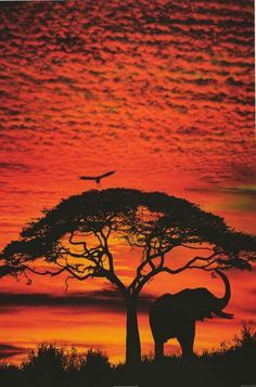 African Skies Elephant and Tree at Sunset Jim Kaufman 2002 Photography Poster 24x36