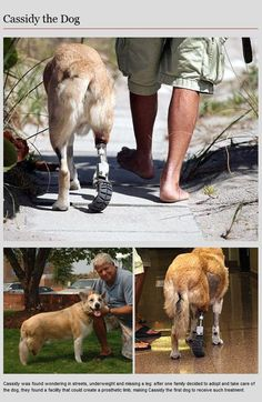 Animal Prosthetics (8 pics) one close to my heart