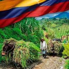 Hoy es un día especial, hoy celebramos el #DíaDeLaIndependencia de nuestro gran país, ¡orgullosamente Colombianos! #TerraPyJ