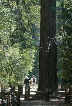 Top Bay Area Campsites (Drive in, Walk in, Hike in, Bike in, Boat in)