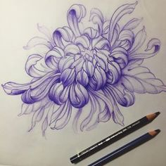 japanese tattoos for strength tattoos – floral tattoo sleeve Japanese Flower Tattoo, Japanese Tattoo Designs, Japanese Sleeve Tattoos, Japanese Flowers, Feather Tattoos, Flower Tattoos, Chrysanthemum Drawing, Japanese Chrysanthemum, Crisantemo Tattoo