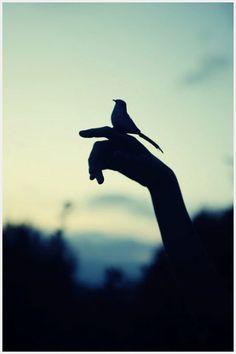 Birdie #photos, #bestofpinterest, #greatshots, https://facebook.com/apps/application.php?id=106186096099420