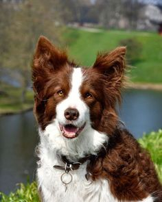 "filmgeekroyalist: ""Ziggy, the Danish Crown Princely family dog, passed away last Sunday. RIP. This photo was taken on Sunday by Crown Princess Mary. """