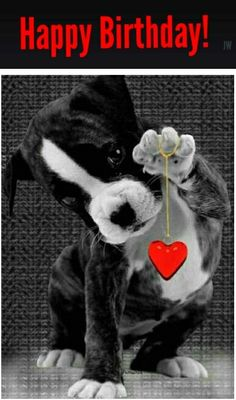 Animação animals -gif birthday images, happy birthday wishes Animals And Pets, Baby Animals, Funny Animals, Cute Animals, Bisous Gif, Cute Puppies, Cute Dogs, Boxer Love, Cute Kittens