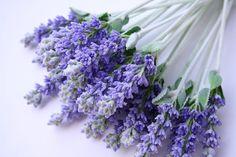 SAHYA :: Arte en Cosmetica ... Cosmetica Natural ---> FRESCA ingredientes naturales // esencias