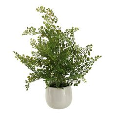 D&W Silks - D&W Silks Wire Fern In White Ceramic Planter - Wire fern in white ceramic planter