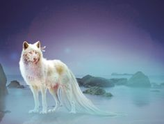 Lost white Wolf - Desktop Nexus Wallpapers