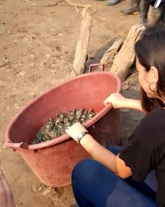 Mini turtles going back to the water. - Mini turtles going back to the water. Funny Animal Videos, Cute Funny Animals, Cute Baby Animals, Animals And Pets, Cute Dogs, Cute Babies, Cute Creatures, Beautiful Creatures, Animals Beautiful