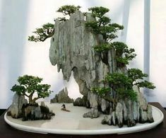 A Guide To Bonsai Trees For Beginners Bonsai Tree Ideas. The art form of bonsai can be a wonderful and unique hobby. Viewing and taking good care of a bonsai collection can be a relaxing and peaceful daily job. The Read Ikebana, Plantas Bonsai, Bonsai Plants, Bonsai Garden, Bonsai Trees, Tree Garden, Moss Garden, Succulents Garden, Cactus Plants