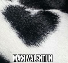 Maxi ♡