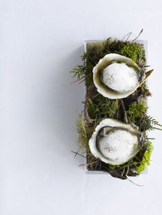 Oysters in the Bush... Fresh Oysters served under a light lemoned kawakawa freeze... so so nice