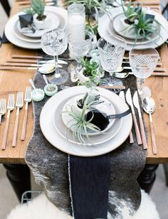 Location the table: Succulent Type
