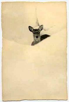 Masao Yamamoto Yamamoto, John Batho, Illustrations, Illustration Art, Photocollage, Oh Deer, Oeuvre D'art, Fine Art Photography, Online Art