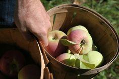 The Best of this Life:  Apple Picking! Autumn, Autumn, Autumn