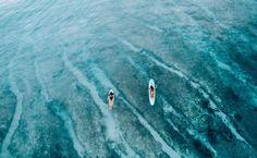 Wild Aloha | Herewith @roxy
