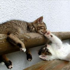 Hey... Hey... Hey..... Wake up!!!