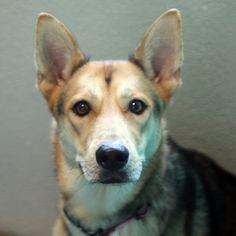 Belle - SPCA of Texas (McKinney)