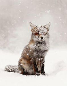 #winter #Amazing #photography