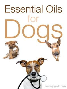 Even dogs can benefit from Essential Oils! fleas, ticks, poor oral health, nervousness and much more can help your pooch feel better faster  #ebook #download #canine #dog #essentialoils