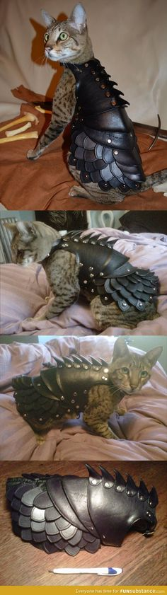 My cat is not the one who needs the armor. Still...Battle Cat!!