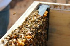 Splitting of the hive. Check out how we split our original hive into three hives. Truly amazing!