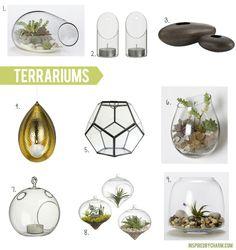 A few of my favorite terrariums!