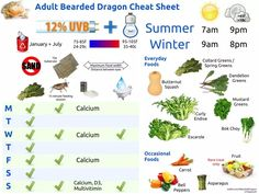Bearded Dragon Cheat Sheets - Imgur