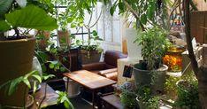 秘密基地植物園 Indoor Garden, Indoor Plants, Crazy Wedding, House Plants, Interior, Green, Room, Osaka, Google