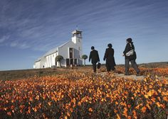 Namaqualand Daisies bloom in early spring in front of the Dutch Reformed Mission Church of Africa on a hill in Loeriesfontein in the Hantam Karoo. Mountain Pass, Early Spring, Daisies, Aloe, South Africa, Dutch, Destinations, African, Spaces
