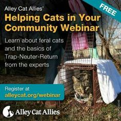 On Wednesday, August 14, 2013 at 7 PM EDT. Come learn about feral cats! Don't believe the misinformation on feral cats...FIND OUT THE FACTS!