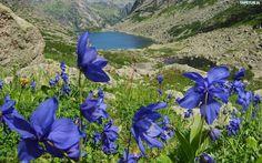 Niebieskie, Kwiaty, Góry, Staw